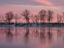 Trädreflexion med rosa himmel royaltyfria bilder