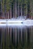 Trädreflexioner i sjön Arkivbild
