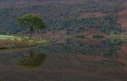 trädreflexioner på sjön Crummock, sjöområde arkivfoton