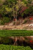 Trädreflexionslandskap Fotografering för Bildbyråer
