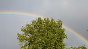 Trädregnbågegräsplan Arkivbild