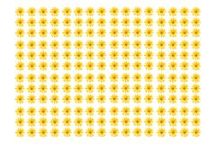 Trädringblomma, mexicansk tournesol, mexicansk solros, japansk solros, Nitobe krysantemum royaltyfria bilder
