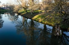 Träds reflexion royaltyfri bild