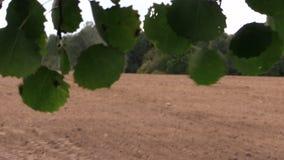 Trädsidor flyttar sig i vind, och traktoren gödslar suggafältet arkivfilmer
