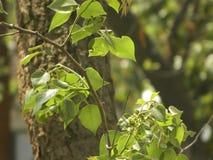 Trädsidor och trädfilial arkivfoton