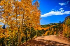 Trädsidor som ändrar färg Arkivfoto