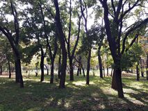 Trädsihlouettes i parkera Arkivfoto