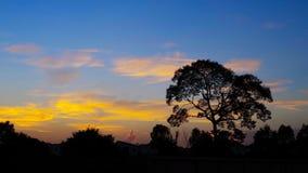Trädsihouette med trevlig solnedgånghimmel Arkivbild