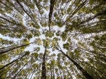 Trädsikt från jordningen Royaltyfri Fotografi