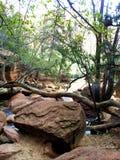 Trädsikten är i Zion NP Arkivbild