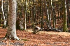 Trädsikten som är stupad i höst, parkerar Royaltyfri Foto