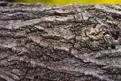 Trädskäll Royaltyfria Foton