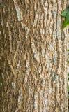 Trädskäll Royaltyfria Bilder
