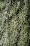 Trädskäll eller Rhytidome texturdetalj royaltyfria foton