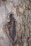 Trädskäll för bakgrunder Arkivbilder