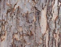 Trädskäll för bakgrunder Arkivfoton