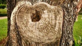 Trädskäll för textur och bakgrund Royaltyfria Bilder