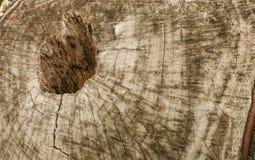 Trädskäll för textur och bakgrund Arkivfoto
