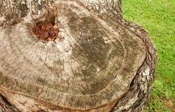 Trädskäll för textur och bakgrund Arkivfoton