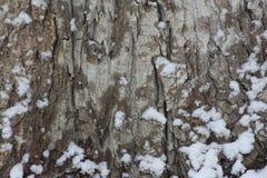 Trädskäll i snön Vinterjul arkivfoton