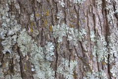 Trädskäll med grön svampbakgrund arkivbilder