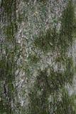 Trädskäll med gröna laver Fotografering för Bildbyråer
