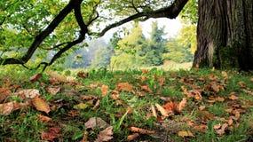 Trädskäll och fallande Autumn Leaves fotografering för bildbyråer