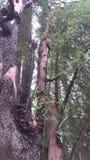 Trädskäll och stammar Royaltyfria Foton