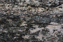 Trädskäll som är passande för bakgrundsbild fönster för textur för bakgrundsdetalj trägammalt arkivbild