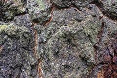 Trädskäll som bakgrund eller textur royaltyfri fotografi