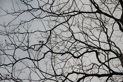 Trädskäll som konvergerar in i de Fotografering för Bildbyråer