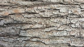 Trädskäll/wood textur abstrakt textur Royaltyfria Bilder