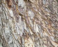 Trädskället Royaltyfria Foton