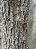 Trädskället har grov hudnaturbakgrund arkivfoto