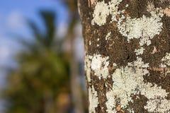 Trädskället med mossa och suddighet gömma i handflatan bakgrund arkivbilder
