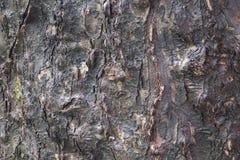 Trädskället som är fuktigt efter regn arkivbilder