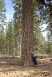 Trädskog nära Lava Butte Oregon Arkivfoton