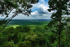 Trädskoglandskap Arkivbilder