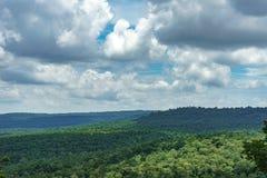 Trädskoglandskap Arkivbild