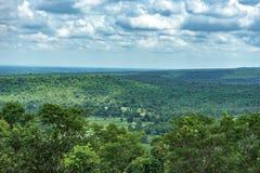 Trädskoglandskap Royaltyfri Bild