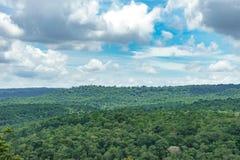 Trädskoglandskap Royaltyfria Bilder
