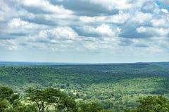 Trädskoglandskap Royaltyfria Foton