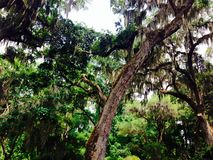 Trädskott Arkivfoto