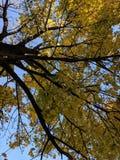 Trädskugga arkivfoton