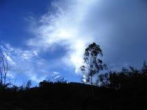 Trädskugga i blåtten fotografering för bildbyråer