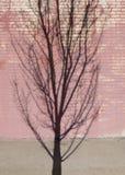 Trädskugga på en vägg för röd tegelsten fotografering för bildbyråer