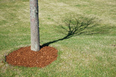 Trädskugga på gräsmattan Arkivfoton