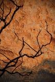 Trädskugga på rött vaggar Royaltyfria Bilder
