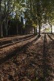 Trädskuggor i bokträdskog i Skottland Royaltyfri Foto