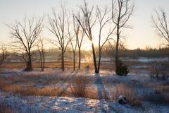 Trädskuggor på snön på soluppgång Arkivfoto
